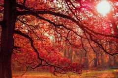 Banch in the autumn park Royalty Free Stock Images
