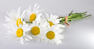 Banch of camomile Royalty Free Stock Photo