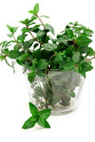 Banch of mint on white background, peppermint, selective focus, Stock Photo