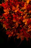 Banch of red flowers. Banch ref red flowers yellow bud macro tiny black spring colours stock image