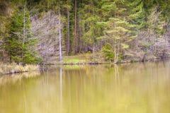 Banche di un lago colorato Immagine Stock