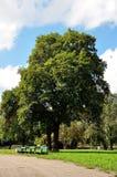 Banches en bomen in het park Royalty-vrije Stock Foto