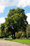 Banches och träd i parkera Royaltyfri Foto