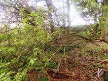 Banches och trädnr Crookham Northumerland, England UK Arkivbild