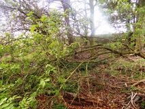Banches y nr de los árboles Crookham Northumerland, Inglaterra Reino Unido Fotografía de archivo