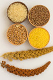 Banches of yellow and red switch grass, rice, millet, buckwheat Stock Image
