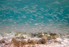 Banchi dei pesci fotografia stock