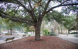 Banchi di parco della città sotto un albero acceso Fotografia Stock