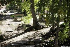Banchi nel legno Fotografia Stock