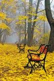 Banchi rossi in un parco immagine stock