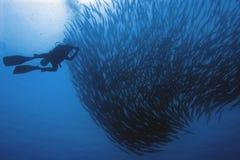 Banco & operatore subacqueo di Barracooda Fotografia Stock Libera da Diritti