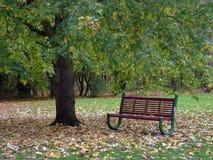 Banco bajo árbol Imagen de archivo