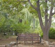 Banco bajo un árbol Foto de archivo