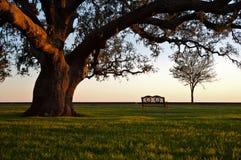 Banco bajo un árbol de roble magnífico Imágenes de archivo libres de regalías
