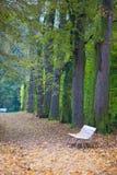 Banco blanco en parque del otoño fotos de archivo