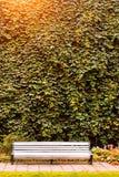 Banco branco, vinhedo da parede alta Tallinn Fotografia de Stock Royalty Free