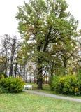 Banco cerca del árbol Foto de archivo libre de regalías