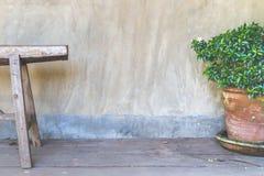 Banco con la planta decorativa en fondo del muro de cemento Fotografía de archivo