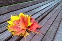 Banco con las hojas de arce caidas en parque del otoño Fotografía de archivo libre de regalías