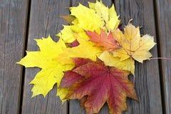 Banco con las hojas de arce caidas en parque del otoño Fotografía de archivo