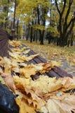 Banco con le foglie gialle Autumn Colors Banco nella sosta della città Distensione immagini stock