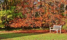Banco con un bello terreno boscoso fotografie stock libere da diritti
