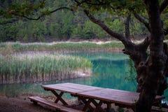 Banco da árvore plana e um lago verde fotos de stock