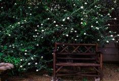 Banco davanti al giardino nel Sudafrica fotografia stock libera da diritti