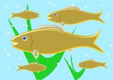 Banco de areia do peixe dourado Fotos de Stock Royalty Free