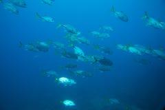 Banco de areia dos peixes imagem de stock royalty free