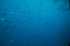 Banco de areia dos peixes foto de stock royalty free
