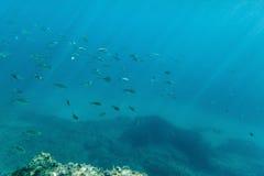 Banco de areia dos peixes Foto de Stock