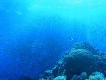 Banco de areia dos peixes imagens de stock