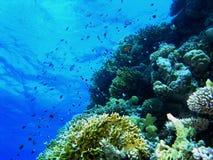 Banco de areia dos peixes fotografia de stock