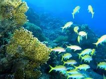 Banco de areia dos peixes fotos de stock