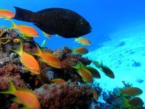 Banco de areia dos peixes fotografia de stock royalty free