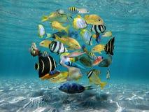 Banco de areia dos peixes acima de um fundo do mar arenoso foto de stock