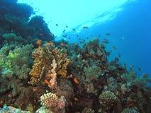Banco de areia dos peixes no recife foto de stock