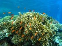 Banco de areia dos peixes no recife imagens de stock
