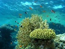 Banco de areia dos peixes no recife imagem de stock royalty free