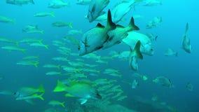 Banco de areia dos peixes subaquático video estoque