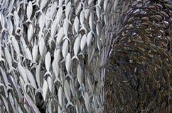 Banco de los pescados Imagen de archivo libre de regalías
