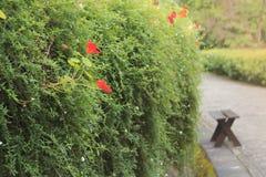 Banco de madeira em arbustos da flor na natureza exterior do jardim com luz solar Fotos de Stock