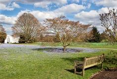 Banco de madeira em um parque com esquecer-me-nenhumas flores Imagens de Stock Royalty Free