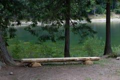 Banco de madeira na costa de um lago Fotos de Stock Royalty Free