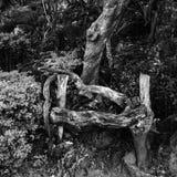 Banco de madera Imagenes de archivo