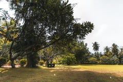 Banco de madera de color marrón oscuro al aire libre debajo del árbol Foto de archivo