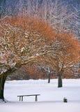 Banco de madera debajo de los árboles en bosque del invierno Fotografía de archivo libre de regalías