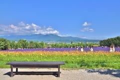 Banco de madera delante del campo de flor del arco iris Imagen de archivo