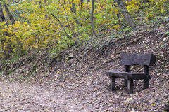Banco de madera en bosque del otoño Imagen de archivo libre de regalías